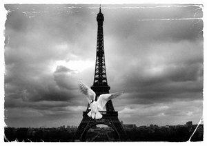 dove_paris_by_asunaphel.jpg