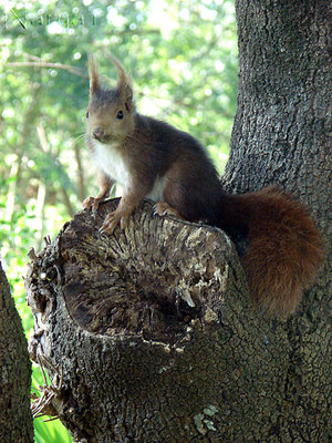 wild_squirrell_2_by_narya13