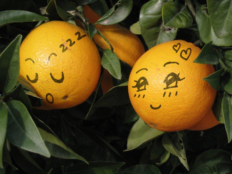 oranges_____by_stardazzle